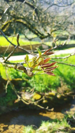 Nature_collection Dimancheapresmidi Bourgeons Printemps Sun Flowers Eclosion Floraison Vie Hello World