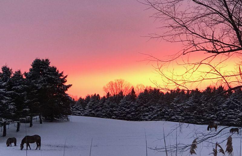 Winter, sunset,