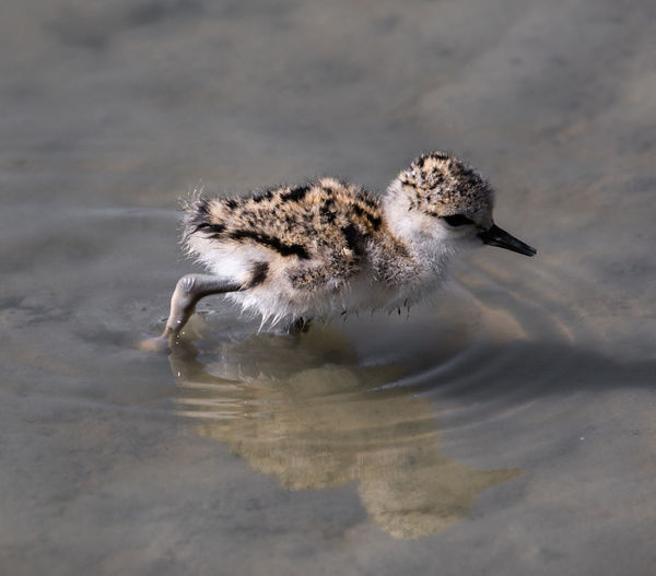 High angle view of bird in water