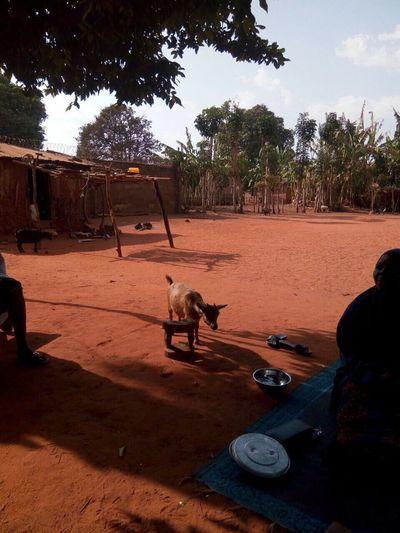 Domestic Animals Animal Themes Nature African Nature Kogi Nigeria Iron Ore African African Village