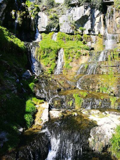 Swiss,Water No