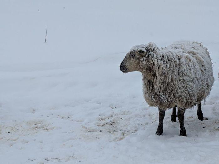 Wool is best