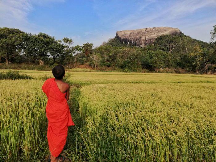 Sri Lanka 🇱🇰 Buddhism Culture Nice Whether Paddy Field EyeEmNewHere Small Monks Colorful Rock Pidurangala Buddhism