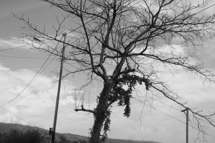 bnw Tree Nature