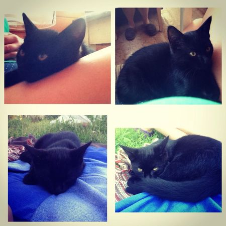 My Little Cat☺ My Love❤ My Life