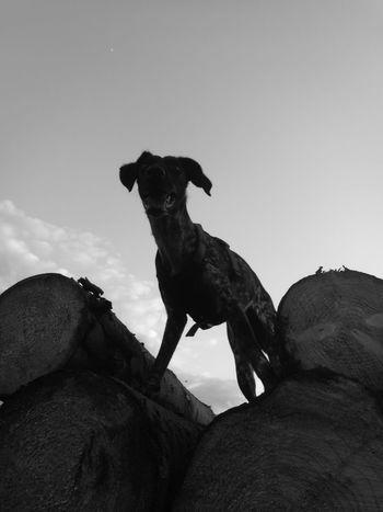 One Animal Animal Themes Outdoors Monochrome Photography Nature Blackandwhite Black & White Dog Pets