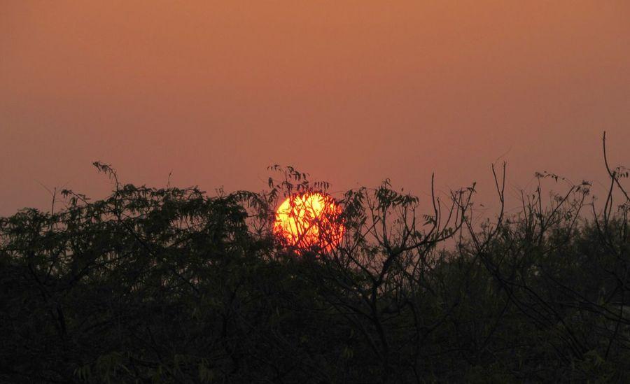 Beautiful Sunset Sunset Trees Canon