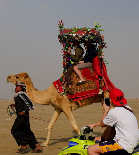Saudi Arabia camels and horses in the desert for riding and walking and travel Al Khobar Camel Racing Desert Life Dog Lover Saudi Arabia Desert Saudi Arabia Tourism Saudi Camel Travel Travel Photography Camel Man Camel Ride Camel Trip Camels Camels Travel Day Desert Beauty Desert Landscape Dog Playing Dog Portrait Domestic Animals Horse Riding Horses In Desert Mammal Outdoors Saudi Arabia Travel Destinations