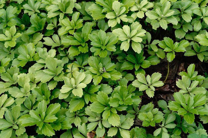 Green Color Full Frame Growth Plant Leaf Plant Part Backgrounds