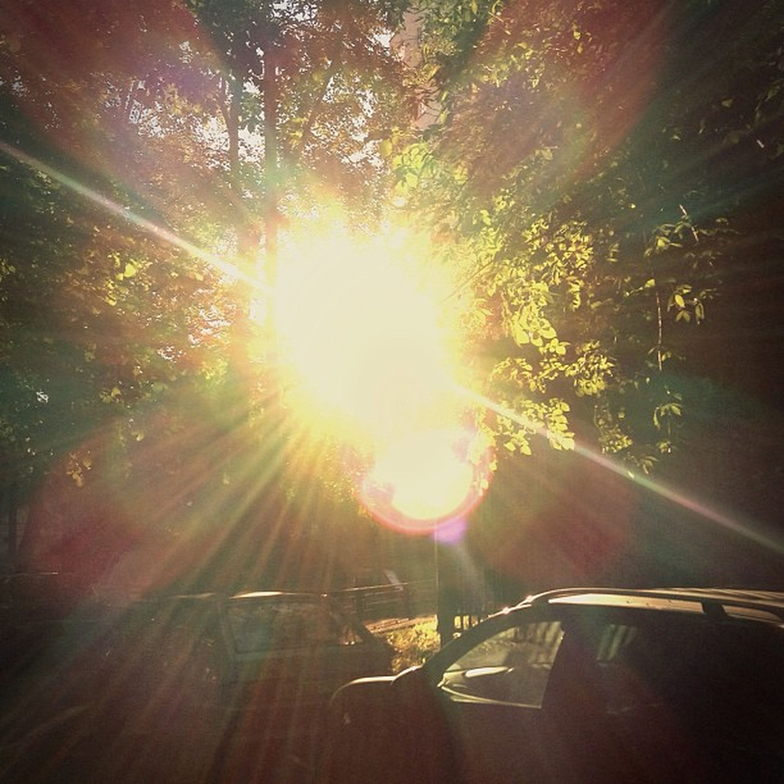 sun, transportation, sunbeam, sunlight, lens flare, tree, car, mode of transport, land vehicle, road, bright, sunny, on the move, nature, street, outdoors, travel, the way forward, no people, shiny