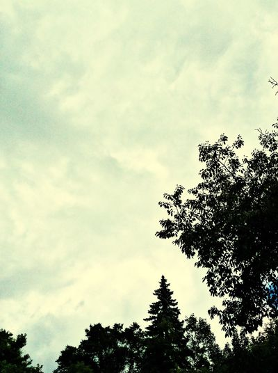 Beauty In Nature Cloud - Sky Outdoors Cloudy Treetop