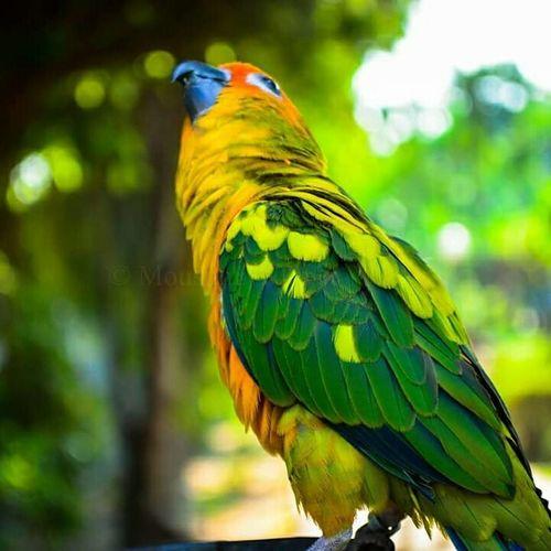 Bird Photography Birds Of EyeEm  Beautiful Nature Lovely Bird Colorful Bird Junglelover EyeEm Nature Lover Green Pattaya Thailand