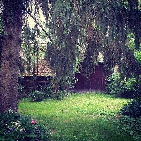 Hungary Zalamegye Zala Tree Old House