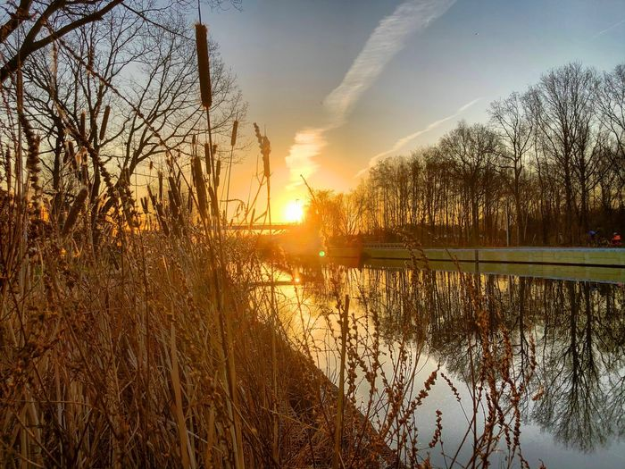 Golden sunrise or sunset over the water of a tree lined river or canal flowing through the forest landscape as seen from behind high grass and reed on the riverside Sunset Sky Tree Plant Water Nature Sunlight Beauty In Nature Lens Flare Sun Scenics - Nature Reflection Tranquility Tranquil Scene No People Orange Color Sunbeam Idyllic Outdoors
