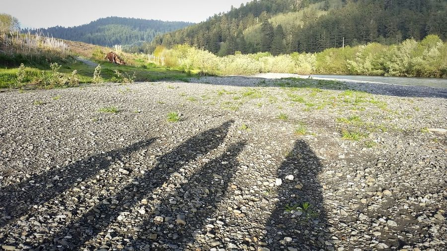 A walk along the riverside with shadows at our feet. Shadow Light And Shadow Riverbank Northern California Composition Outside Nature Outdoors Riverside Walking