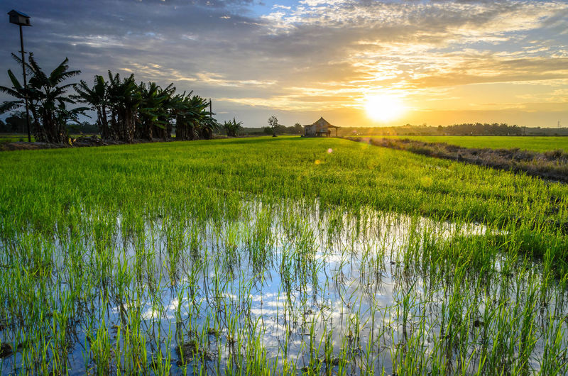 Erwin Agriculture Beauty In Nature Calm Cloud Cloud - Sky Crop  Farm Field Grass Green Color Growth Landscape Nature Outdoors Plant Rural Scene Scenics Sky Solitude Standing Water Sun Sunset Tranquil Scene Tranquility Water