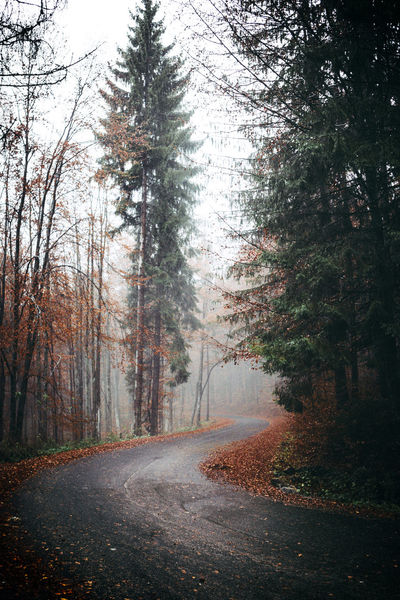 Autumn Autumn Colors Autumn Leaves Beauty In Nature Day Fog Forest Green Color Landscape Landscape_Collection Misrata Misty Misty Morning Nature Nature Nature Photography Nature_collection Naturelovers No People Outdoors Road Road The Way Forward Tranquility Tree