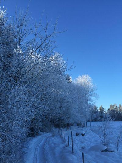 Enjoying Life Snow Winter Trees Countryside Beautiful Day