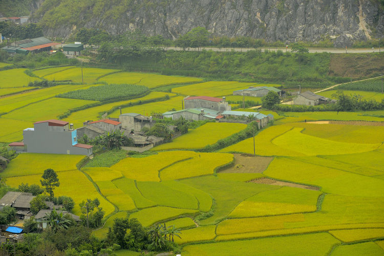 Beautiful View of Quan Ba town in Ha Giang district during cloudy and foggy morning. Witness of the twin mountain . The road is the gateway to the Dong Van Karst Plateau Geopark Quản Bạ World Heritage Site By UNESCO Unesco Landscape Geopark Town Paddy Fields Scenics - Nature Environment Field Plant Tree Land Tranquil Scene Green Color Growth Rural Scene Nature Agriculture Beauty In Nature Farm Architecture Tranquility Day Patchwork Landscape No People Outdoors