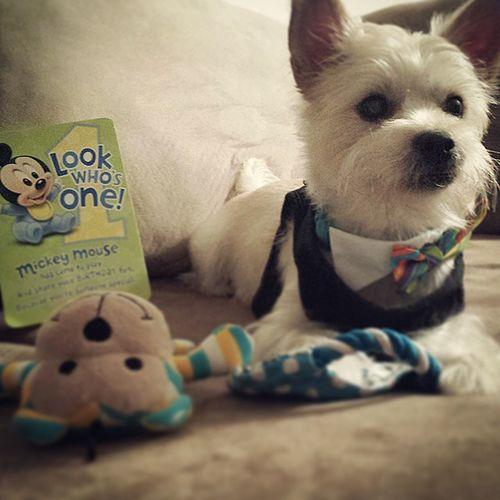 Happy Birthday to my baby Luca! 😙😍 Cute Dog