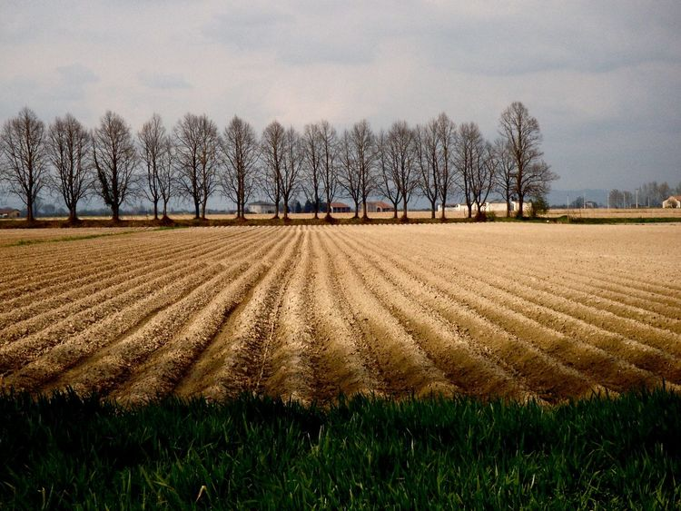 Agriculture Beauty In Nature Field Furrows Landscape_Collection Learn & Shoot: Leading Lines Rural Landscape Tranquil Scene Landscapes With WhiteWall