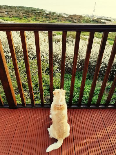 Thinking dog Dog Sea Thinking Wood - Material Terrace Wooden Horizon Over Water