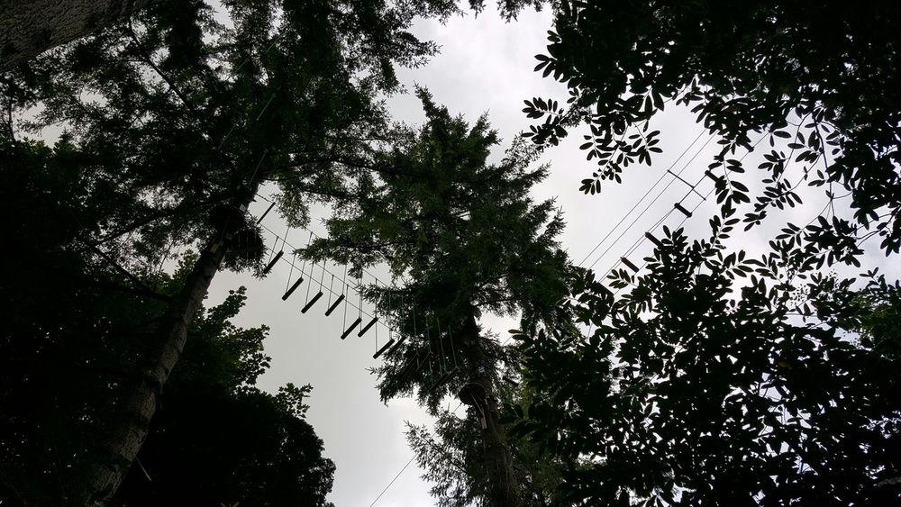 Treetops Aerial Walkway