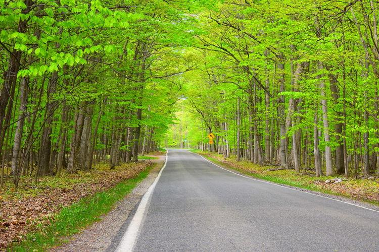 Tree Road Grass