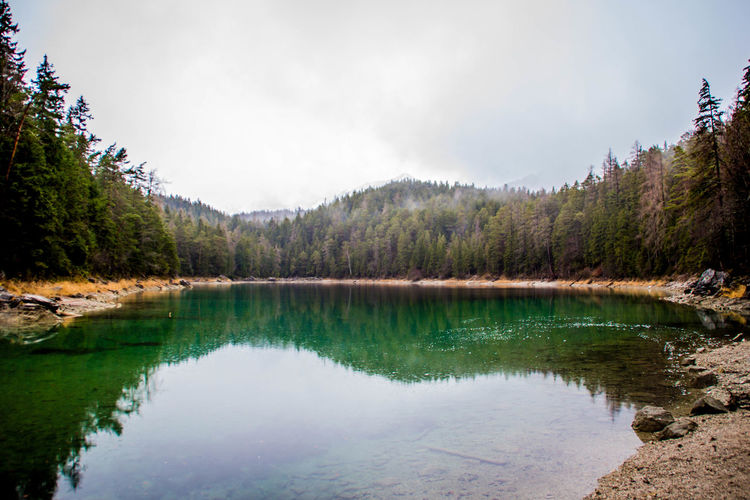 Water Tree Reflection Lake Scenics - Nature Sky Tranquility Tranquil Scene Plant Forest Nature Day No People Cloud - Sky Beauty In Nature Land Mountain Non-urban Scene Travel Destinations Outdoors Pine Tree Coniferous Tree Pine Woodland Purity