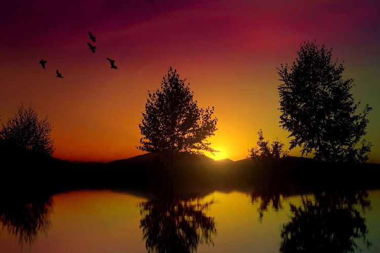Sunset Silhouette Nature Sky Beauty In Nature Bird Flying Tranquility No People Water Tree Animal Themes Animals In The Wild Scenics Waterfront Outdoors Day Reflection Landscape Travel Colors Tranquility Shadow Light And Shadow Cloud - Sky