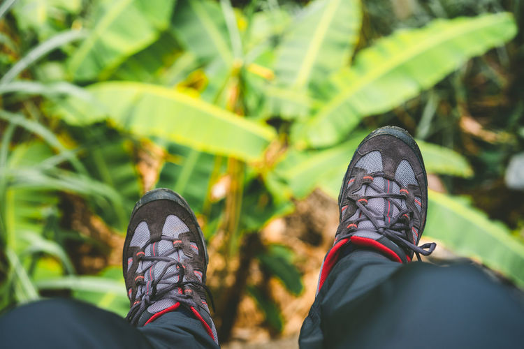 Low section of person wearing shoes against banana trees