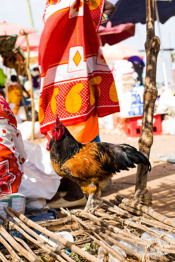 Chicken Kenya Market Poultry Red Tanzania Africa Africa Travel Backgrounds Close-up Colorful Farming Food For Sale Maasai Maasai Market Market Stall Meat People Pretty World Market Yellow An Eye For Travel EyeEmNewHere Business Stories An Eye For Travel EyeEmNewHere