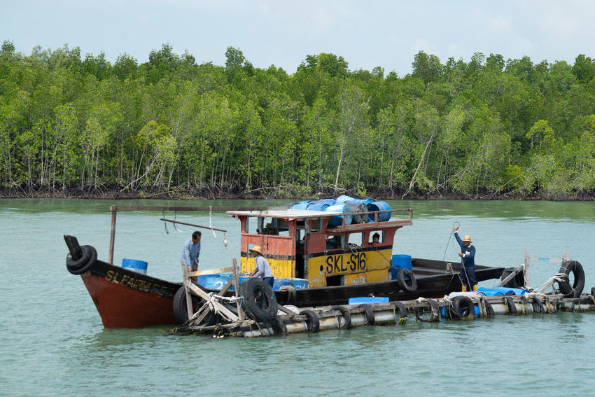 A view of a fishermen's village on stilts besides the sea in Pulau Ketam (Crab Island). This island is famous for sea food products and restaurants. Beauty In Nature Crab Island Day Green Color Men Mode Of Transportation Moored Nature Nautical Vessel Non-urban Scene Outdoors Plant Pulau Ketam Malaysia Real People Sea Sky Transportation Travel Tree Water Waterfront