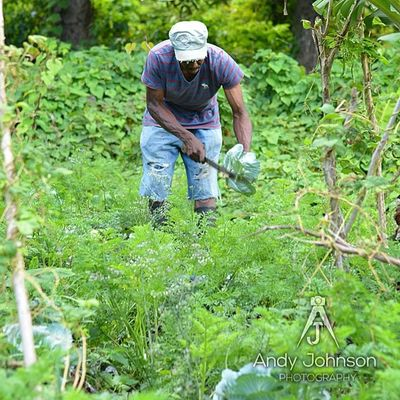 Farmer Nature_shooters Natureshots Nature Nikon Greenz Grenada Ilivewhereyouvacation Ig_caribbean Ig_captures Westindies_pictures Wu_caribbean All_shots Agriculture Awesome Myhappyclicks MostStunningshot Mybest_shots Master_shot
