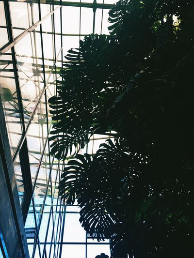 Tree No People Indoors  Low Angle View Built Structure Sky Nature Day Palm Tree Growth Greenhouse Architecture