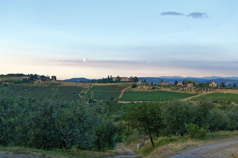 Evening in Toscane Italy Agriculture Colored Sky Country Road Exploring Horizon Over Land Landscape Scenics Tranquil Scene