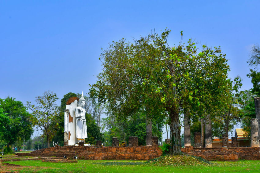 EyeEm Gallery EyeEm Selects EyeEm Nature Lover EyeEm Best Shots Outdoors Grass Landscape Human Representation Building Place Of Worship Sculpture Nature Built Structure Clear Sky Day Statue No People Belief Architecture Spirituality Plant Religion Tree Thaland Phitsanulok