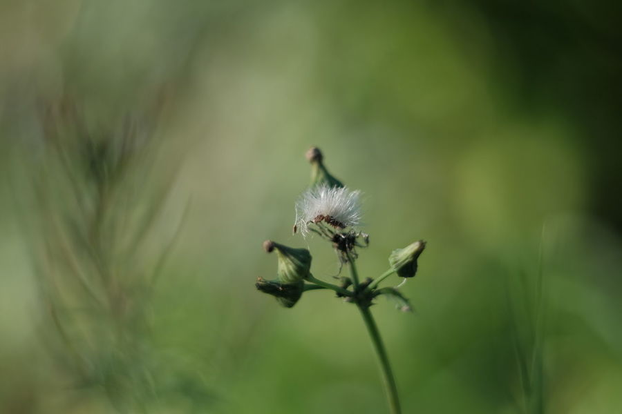 Lonesome Green Spectator Green Painted Growth Nature No People Plant Selective Focus