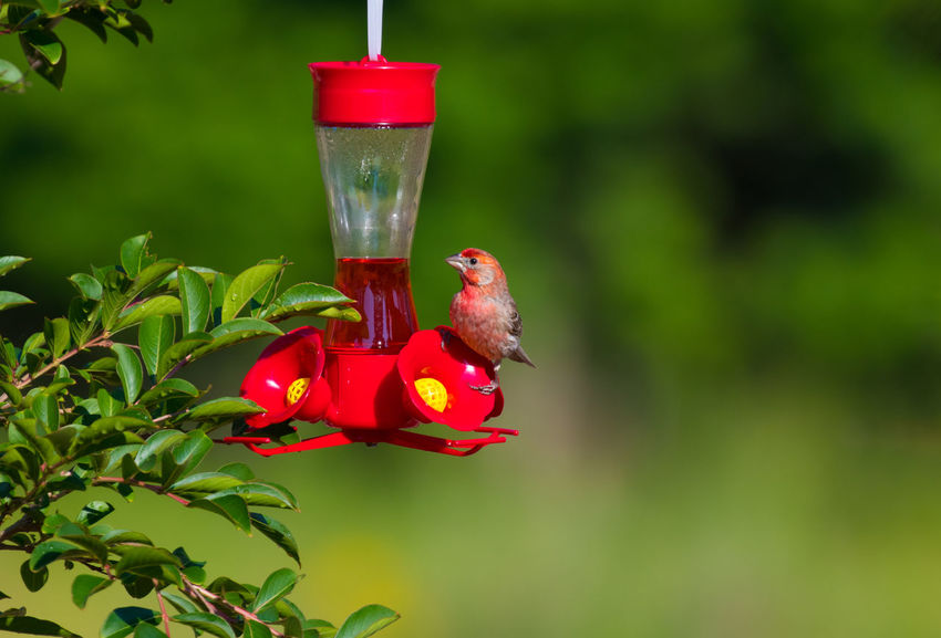 Wren on a feeder Animal Animal Themes Animal Wildlife Animals In The Wild Beauty In Nature Bird Close-up Day Flower Flowering Plant Focus On Foreground Freshness Green Color Growth Nature No People Outdoors Plant Red Vertebrate