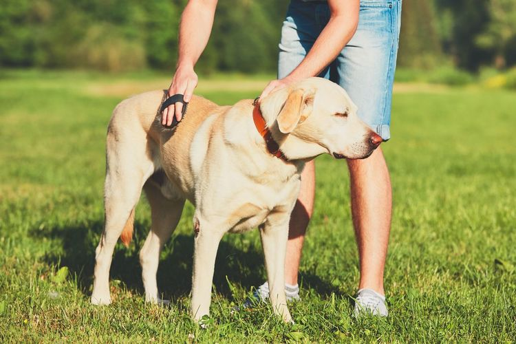 Regular caring for dog. Young man brushing his yellow labrador retriever. Animal Hair Animal Themes Brush Brushing Care Cleaning Combing Dog Dogslife Domestic Animals Enjoying Life Enjoyment Friendship Fur Fury Hairbrush Human Body Part Labrador Labrador Retriever Man One Animal Outdoors Owner Pets
