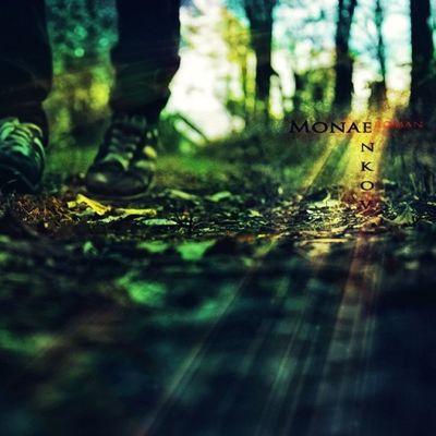 Rm_photo Magic Mystical Wood