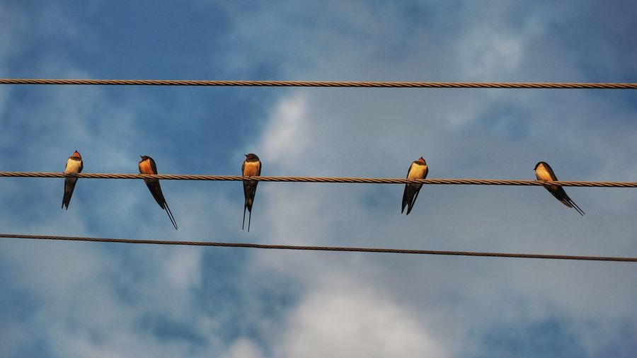 Low angle view of birds perching on cable against cloudy sky