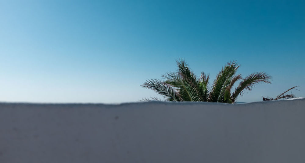 Behind Behind The Wall Blue Sky Copy Space Hidden Hidden Beauty Hidden Gems  Hidden Places Hidden Treasure Ocean Ocean View Palm Palm Leaf Palm Tree Minimalist Minimalism Wall Wall - Building Feature Portugal White Wall Tree