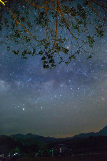 Sky Scenics - Nature Tree Night Nature Beauty In Nature Star - Space Tranquility No People Plant Tranquil Scene Space Astronomy Outdoors Idyllic Mountain Landscape Architecture Galaxy Environment
