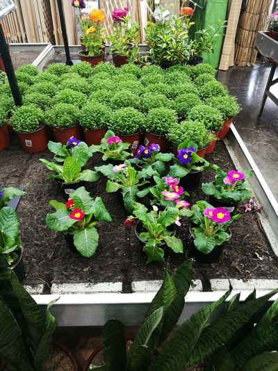 Growth Plant Flower High Angle View Potted Plant Green Color Outdoors Nature Day No People Table Variation Freshness Beauty In Nature Fragility Greenhouse Plant Nursery Close-up