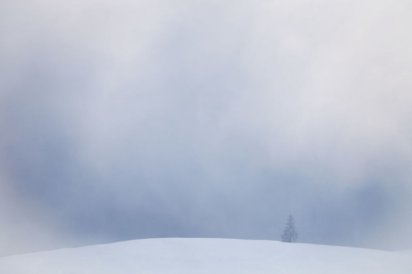 Winter landscapes with Rodnei Mountains, Romania. Alpine Ice Isolated Light Morning Nature Trees Weather Winter Beauty Cold Fog Foggy Forest Landscape Minimalism Mist Mountain Pine Tree Season  Single Snow Sunrise White