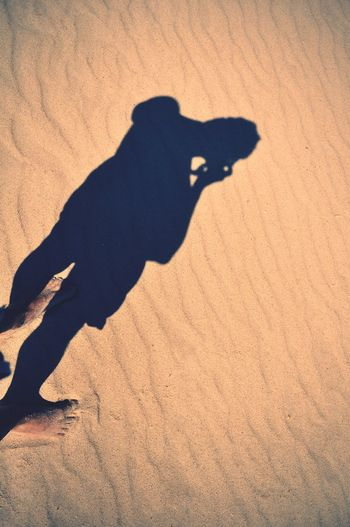 Shadow of dog on sand