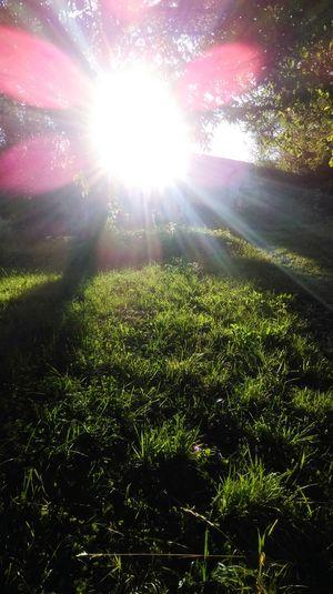 Sun Flare Trees Nature Sun Grass Light And Shadow Sunshine