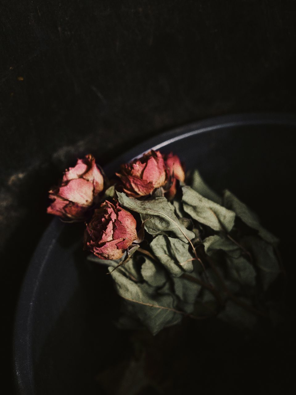 HIGH ANGLE VIEW OF ROSE IN BLACK BACKGROUND