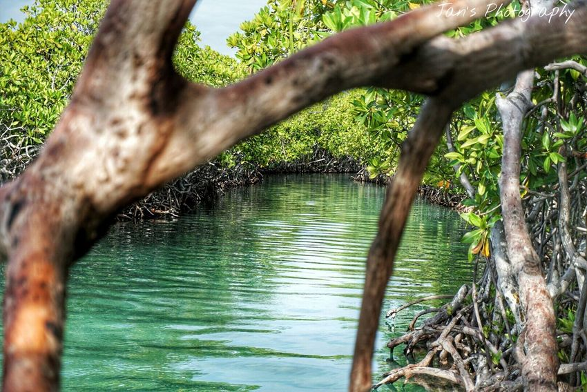 Sony A6000 Sony Giligan Beachphotography Puerto Rico Nature_collection Nature Photography Outdoors No People EyeEm Nature Lover EyeEm Gallery Deapth Of Field From A Tree From My Point Of View Mangrove Nature Lover Jungle Shoot Sea_collection Small Island